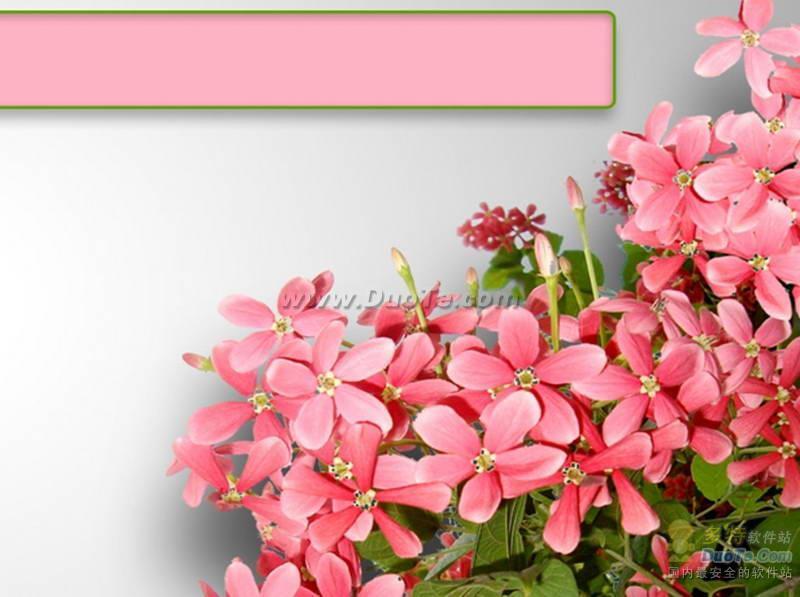 粉色花簇ppt模板,鲜花ppt背景图片,花卉ppt模板下载