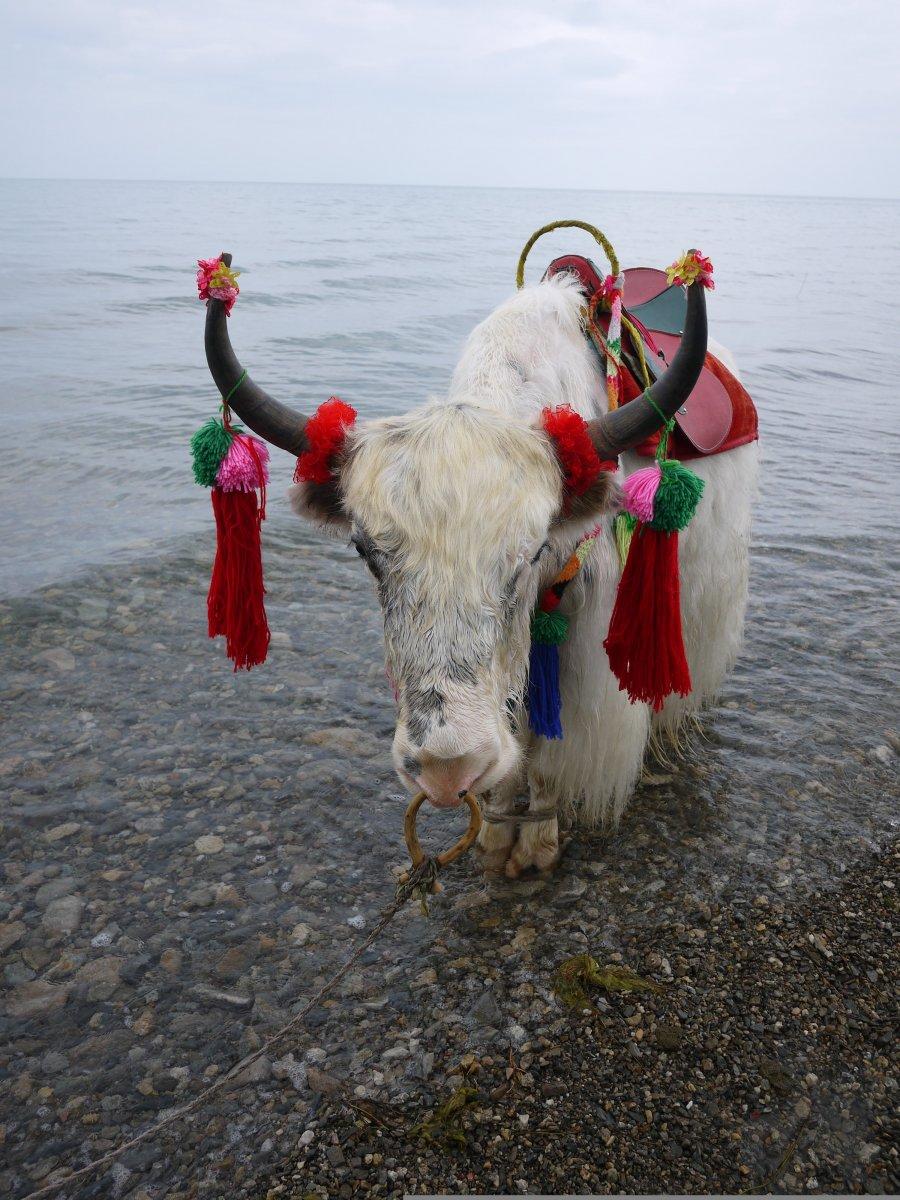 西宁青海湖旅游-西宁青海湖旅游景点-西宁青海湖图片