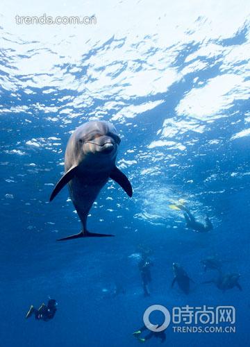 壁纸 动物 海洋动物 鲸鱼 桌面 360_500 竖版 竖屏 手机