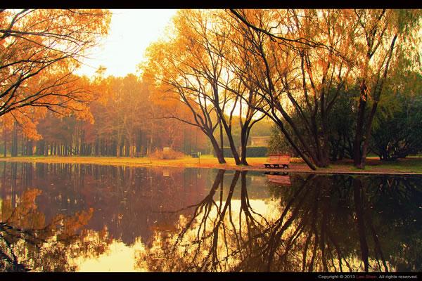 秋季风景作品《魔性森林》的拍摄技巧分享
